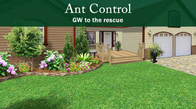 Common Ant Control Indoor and Outdoor